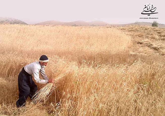 امام خمینی و کشاورزان