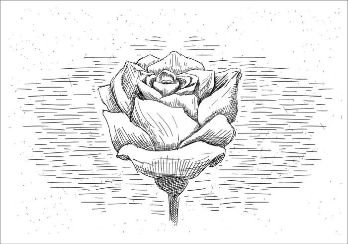 free-hand-drawn-vector-rose