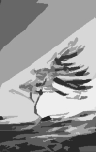 Wind_Tree_Clouds